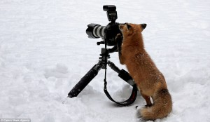 foxtographer